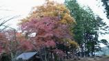 一丁平の紅 葉