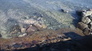 館山 沖の島公園 透明度が高い